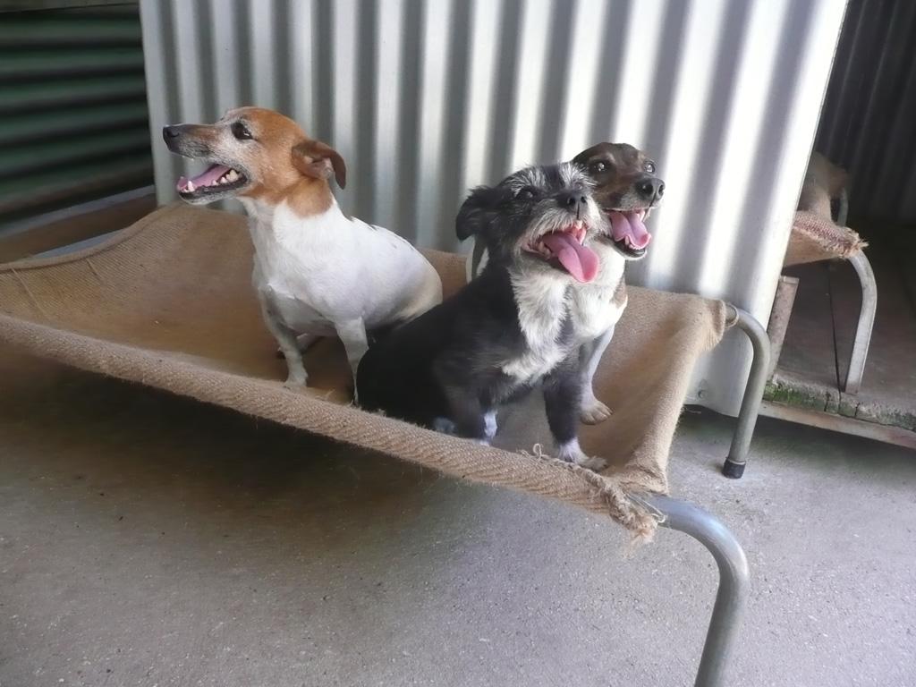 Eureka Dog Kennels Ballarat